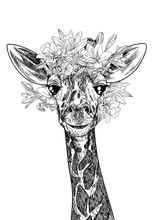Portrait Of Cute Giraffe With Flowers On His Head