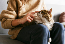 Portrait Of Cute Domestic Cat With Green Eyes Lying With Owner At Home. Unrecognizable Young Woman Petting Purebred Straight-eared Long Hair Kitty On Her Lap. Background, Copy Space, Close Up.