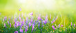 Leinwanddruck Bild - Beautiful gentle spring summer natural background. Butterflies are fluttering over  meadow of wild flowers and young juicy green grass in sunlight on nature, blurred background, soft focus.