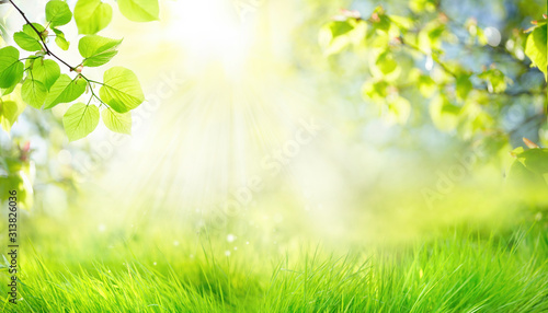 Spring summer background with frame of grass and leaves on nature Canvas Print