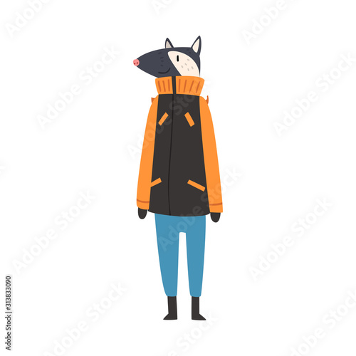 Photo Badger Wearing Warm Winter Clothes, Male Humanized Forest Animal Cartoon Charact