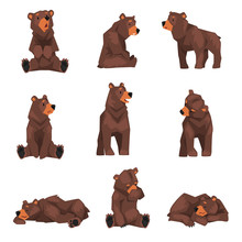 Cute Brown Grizzly Bear Collec...