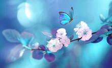 Beautiful Blue Butterfly In Fl...