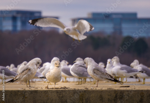 Obraz one individual seagull is the first among equals - fototapety do salonu
