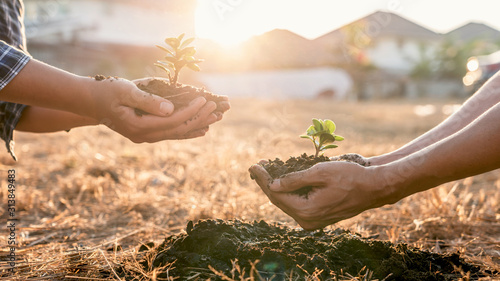 Environment earth day in hands, two people holding of young sprout trees growing Wallpaper Mural