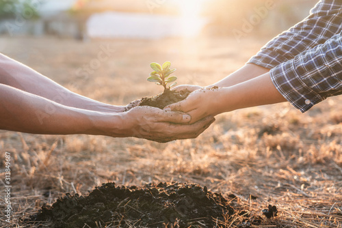 Fototapeta Environment earth day in hands, two people holding of young sprout trees growing seedlings, protection for care new generation to be planted into the soil in the garden as save world concept obraz na płótnie