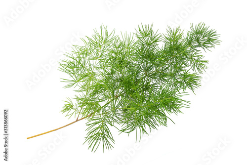 Common asparagus fern Wallpaper Mural