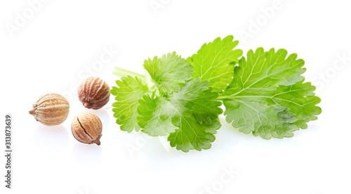 Fototapeta Coriander seeds and leaves on white background obraz