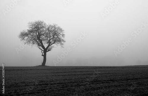 Bare tree in a meadow Canvas Print