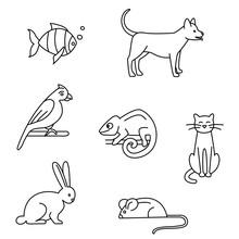 Pet Store Dogs, Cats, Birds, Rabbit, Parrot, Fish, Mouse, Chameleon