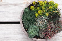 Succulent Plants In A Planter ...