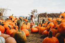 Pumpkin Farm With Girl