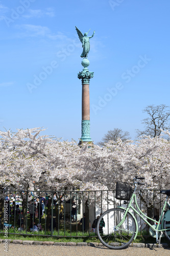 Copenhagen with cherry blossoms and a bicycle in spring Canvas Print