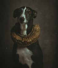 Funny Galgo In Baroque Style On A Vintage Background