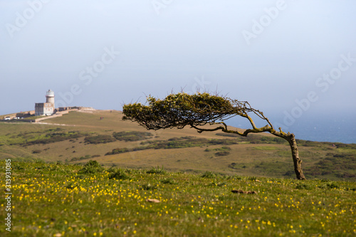 South Downs landscape with windswept tree and lighthouse in the distance Slika na platnu