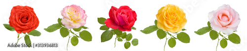Fototapeta Beautiful red, pink, yellow, cream rose set isolated on white background obraz