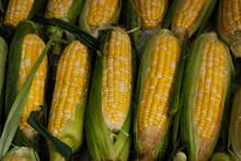 Fresh Corn On Market , Corncobs Closeup ,