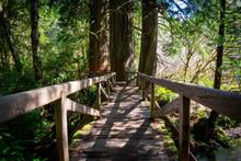 Wooden Bridge In Redwood Forest