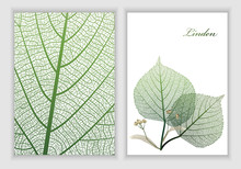 Background Texture Leaf And Leaf Linden Object Isolated On White. Vector Illustration. EPS 10.