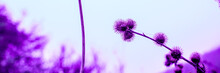 Colorful Dried Flowers Weeds O...