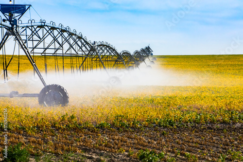 Fototapeta A side view of a long center pivot water irrigation sprinkler system spraying crops from above in a large field, with copy space to the right obraz