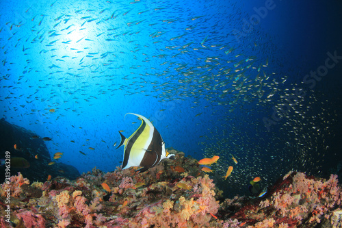 Fototapeta Fish and underwater coral reef obraz