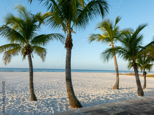 Five palm trees on a white beach in Florida.