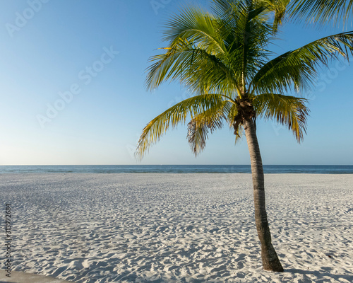 One palm tree on a white beach in Florida.