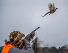 Young Male Takes Aim At A Ringneck Pheasant As It Takes Flight. Wearing Camoflage And Shooting A Rifle.