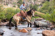 Cowgirl And Horse In Water