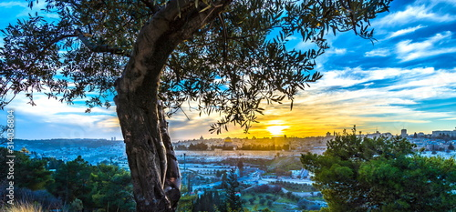 Olive tree on Mount of Olives with view of Old City Jerusalem at sunset