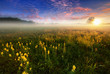 canvas print picture - Beautiful summer foggy morning landscape