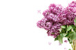 Lilac flowers on white background. Spring flowers. Top view, flat lay, copy space. - Image