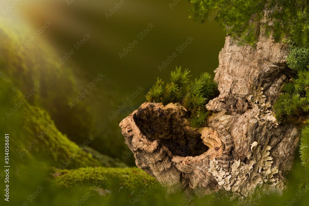 Fototapeta Tree trunk with hole on moss
