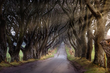Autumn Sunrise At The Dark Hedges With Sunrays Between Branches, County Antrim, Northern Ireland.  Filming Location Of Popular TV Show, Kingsroad, Game Of Thrones