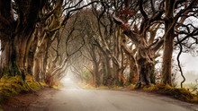 Early Morning In Autumn With Mist Or Fog At The Dark Hedges County Antrim, Northern Ireland. Filming Location Of Popular TV Show, Kingsroad, Game Of Thrones