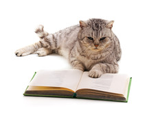 Cat And Book.