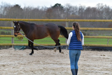 Woman Training Horse With Lanyard