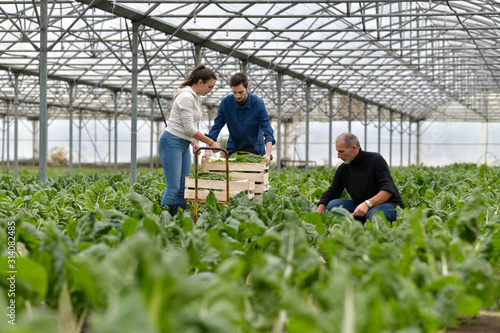 Photo Farmer with apprentice working in greenhouse