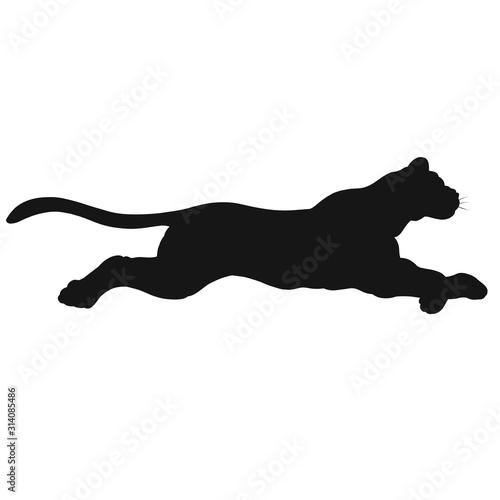 Photo fast run or jump of a big wild cat