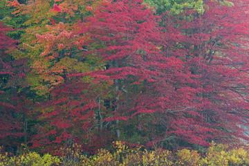 Fototapeta Jesień Autumn landscape of the shoreline of Mud Lake, Michigan, USA