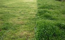 Cut Strip Of Green Grass. Mowi...