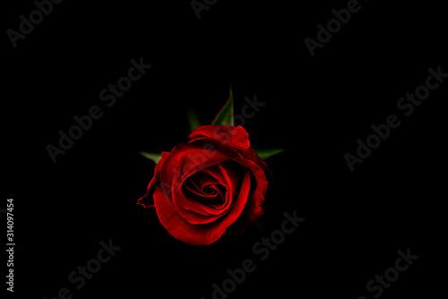 Black background red rose valentines. Canvas Print