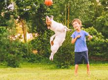 Happy Kid Looking At Jumping D...