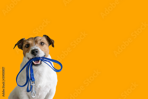 Photo Dog sitting concept with happy active dog holding pet leash in mouth ready to go