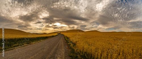Fototapeta Golden Wheat Palouse 2518 obraz
