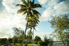 Palm Trees Around The Cairns Esplanade Lagoon Area A Popular Walkway For People To See The Coral Sea Which Links To The Great Barrier Reef Trailing Around Queensland Tourist Popular City