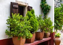 Flowering Plants Of The Mediterranean