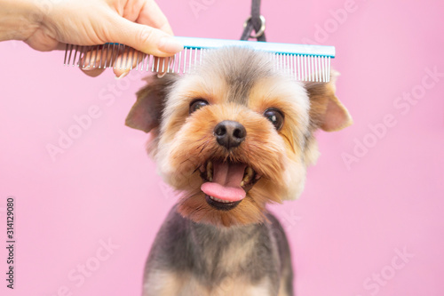 Valokuvatapetti Dog gets hair cut at Pet Spa Grooming Salon