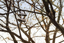 Sneakers Are Hanging On A Tree...
